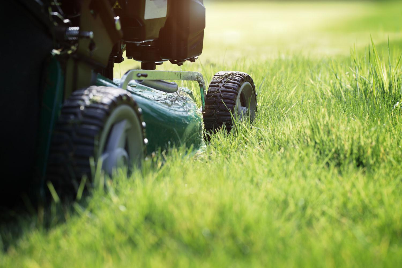 Reber fornisce manutenzione aree verdi e altri servizi di facility